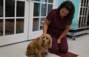 Southern Hills Animal Hospital Sweetie