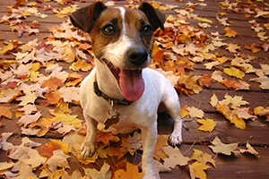 pet fall-safety-tips