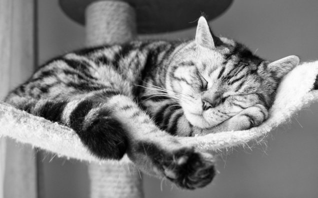 cat sleeping 1