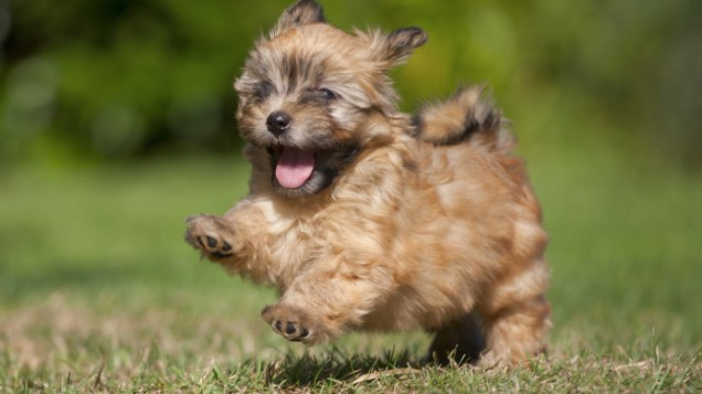 20-of-the-cutest-small-dog-breeds-on-the-planet.jpg