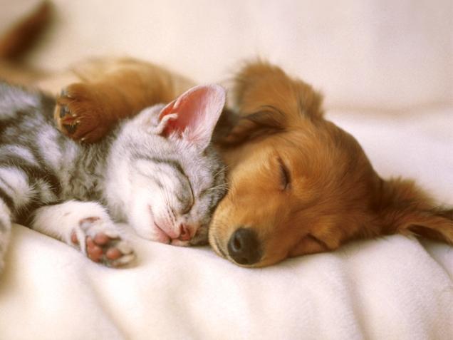 cute-pet-wallpaper.jpg