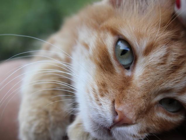 cat cat.jpg