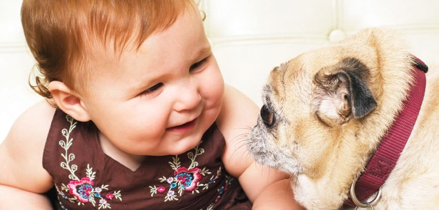 dog-care_common-dog-behavior-problems_dogs-and-babies_main-image_0.jpg