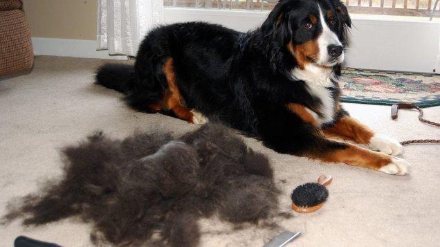shedding-dog-960x540