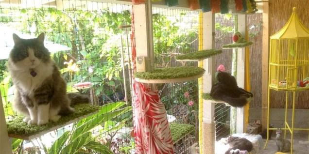 cat-patio-today-160901-tease_c28edfc46c7f2955b6dd5042b6e23313.focal-1000x500.jpg