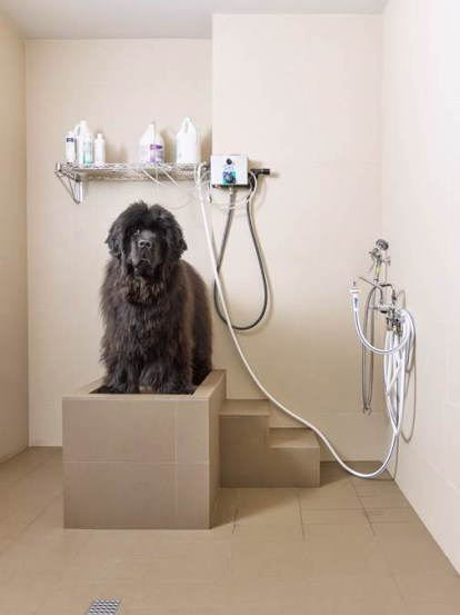 dog-shower-31418-today-02_297738c7c71d65addc91ef7b6e260dce.fit-560w