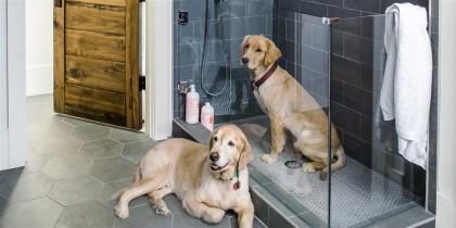 dog-showers-today-180314-tease_fcbdb44a973ec80e8fdb6f7f90cfb183.focal-1000x500