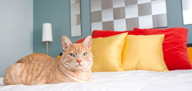orange-cat-laying-on-bed
